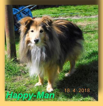 Happy-Man, Shletie-Rüde- vorgestellt von Collies und Shelties in Not