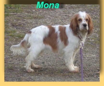 Mona, Cocker-Mix-Hündin- vorgestellt von Collies und Shelties in Not